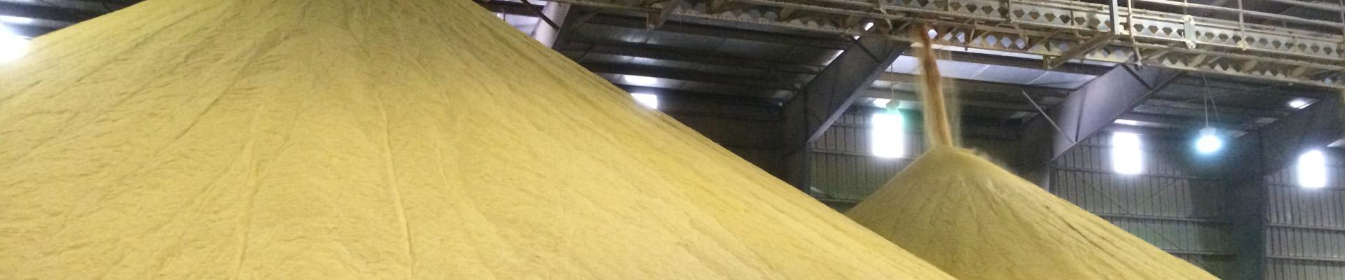 Distillers Grains
