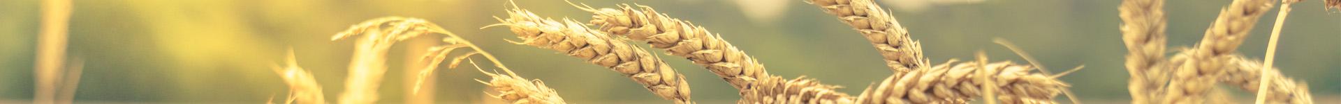 Wheat - Distillers Grains